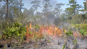 Prescribed Burn Info