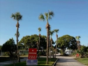 Hurricane Cut Palms
